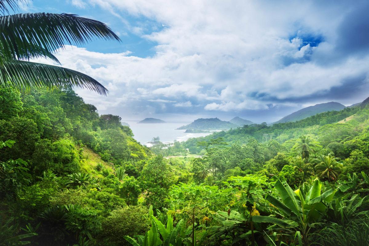 Der Morne Seychellois Nationalpark auf Mahé beherbergt eine faszinierende Pflanzenwelt, die durch die Abgeschiedenheit der Seychellen weltweit einzigartig ist - © Iakov Kalinin/ Shutterstock