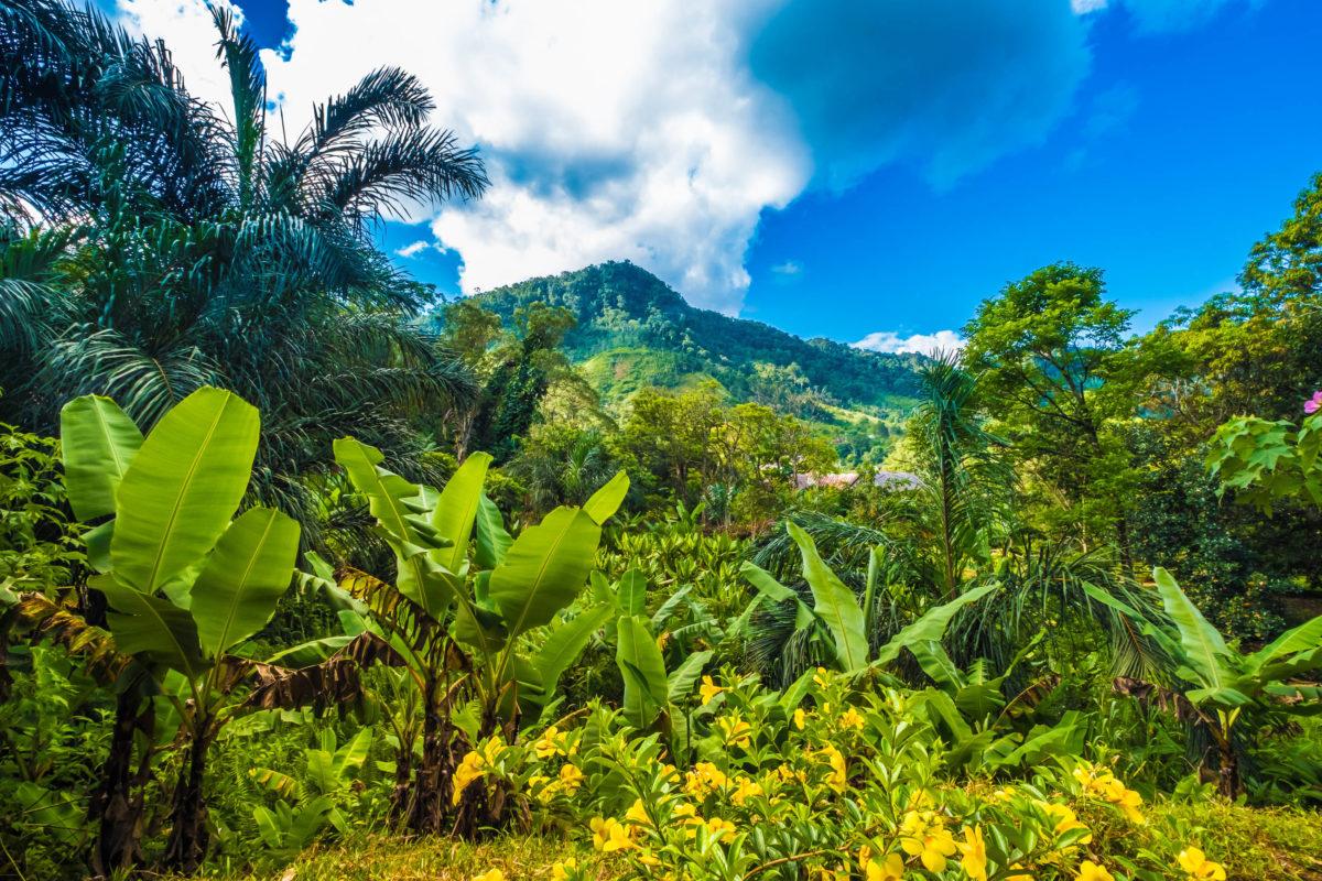 Die Attraktion im Ranomafana Nationalpark in Madagaskar sind die üppig grünen Bergregenwälder, ideal zum eintauchen in die wilde tropische Natur - © LouieLea / Shutterstock