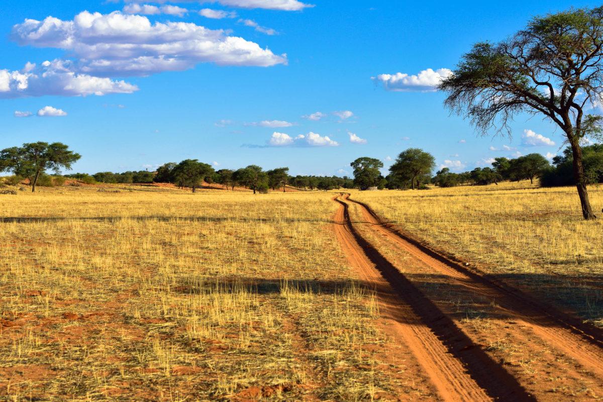 Eine Piste in der Kalahari-Wüste kurz vor Sonnenuntergang, Botswana, Südafrika, Namibia - © Oleg Znamenskiy / Shutterstock