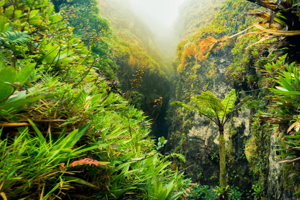 Eingefleischten Bergwanderer, die das Bergmassiv Guadeloupes genauer kennen lernen möchten, ist der Weitwanderweg Sentier de Grande Randonnée zu empfehlen - © kostkantomas / Shutterstock